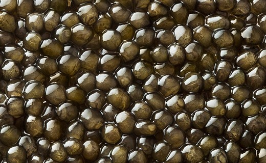 Osetra for export - import Osetra caviar from iran- good price and quality