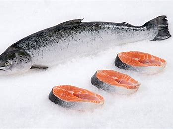 Trout or Salmon fish in iran export , taste , colorized - good price & quality
