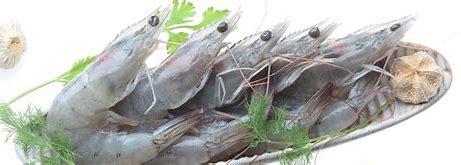 Iran Vannamei or White leg shrimp farming, price and export