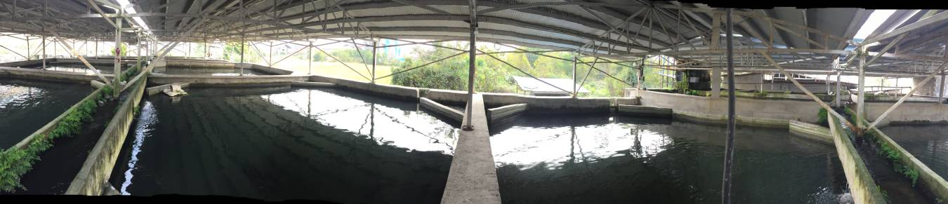 caviar farm