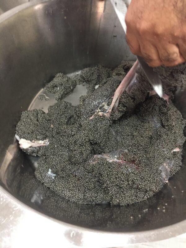 Beluga Caviar - Iranian Caspian sea Caviar